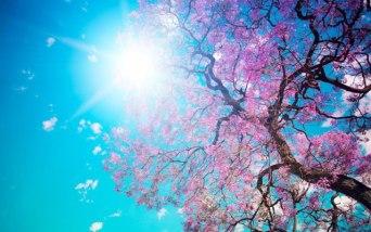 Image result for springtime detox